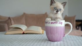Kitten seating in the cup. Cut cat at home stock video