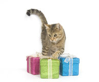 Kitten selecting a gift. A kitten looks over three gift boxes on a white background Stock Photo