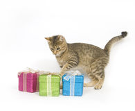 Kitten selecting a gift. A kitten looks over three gift boxes on a white background Stock Image