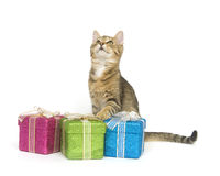 Kitten selecting a gift. A kitten looks over three gift boxes on a white background Stock Photos