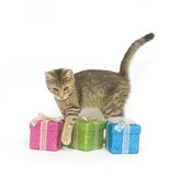 Kitten selecting a gift. A kitten looks over three gift boxes on a white background Stock Images