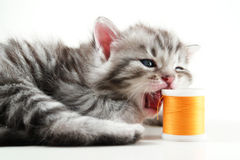 Kitten and sewing bobbin stock photo