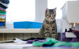 Kitten with sewing machine Stock Photos