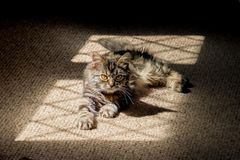 Kitten in the shadows Royalty Free Stock Photography