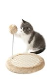 Kitten sharpening it claws Royalty Free Stock Images