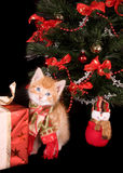 Kitten with shawl stock photos