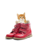 Kitten and the shoes Stock Image