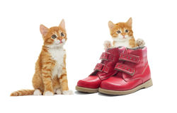 Kitten and the shoes Stock Photos