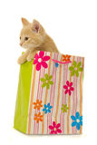 Kitten and shopping bag stock photo
