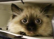 Kitten in shopping bag Royalty Free Stock Image