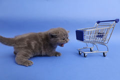Kitten and a shopping cart. Baby kitten walking by a shopping cart, one week old royalty free stock photo