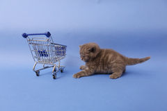 Kitten and a shopping cart Royalty Free Stock Image