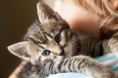 Kitten on the shoulder of the boy outdoors Royalty Free Stock Photos