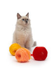 Kitten of the Siberian Neva Masquerade cat sits next to the tangles of thread Royalty Free Stock Photos