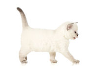 Kitten side view Royalty Free Stock Image