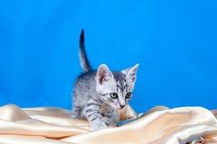 Kitten on a silk fabric Royalty Free Stock Photos