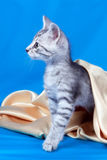 Kitten on a silk fabric Royalty Free Stock Image