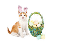 Kitten Siting With Easter Basket. An adorable little kitten wearing Easter Bunny ears sitting next to a pretty straw basket filled with colorful eggs Stock Photo