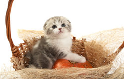 The kitten sits in a basket Royalty Free Stock Image