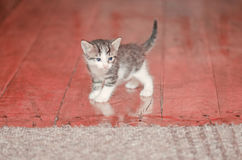 The kitten sits on a carpet Stock Photos