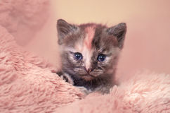 The kitten sits on a carpet Stock Images