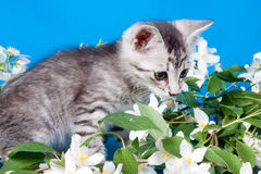 Kitten sits in flowers Royalty Free Stock Photo