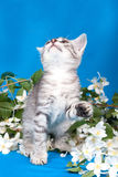 Kitten sits in flowers Stock Images