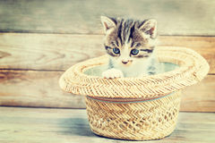 Kitten sits in the hat Stock Images