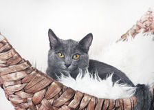 The kitten sits in his couch-boat Royalty Free Stock Photos