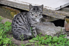 Kitten sits near the basement. Small striped kitten sits near the basement Royalty Free Stock Photo