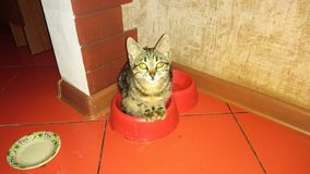 Kitten sits in the Plate royalty free stock photography