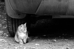 Kitten sits under the car Stock Photography