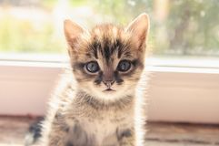 Kitten sits on a window. In the sunlight Royalty Free Stock Photos