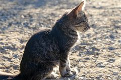 Kitten sitting alone outdoors backlit. Royalty Free Stock Images