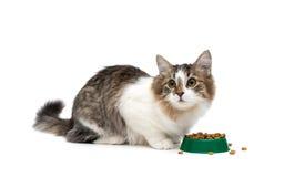 Kitten sitting around a bowl of food isolated on white backgroun Stock Photo