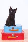 Kitten Sitting Atop Luggage negra en blanco Fotos de archivo libres de regalías