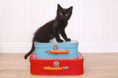 Kitten Sitting Atop Luggage negra en blanco Foto de archivo libre de regalías