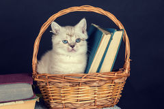 Kitten sitting in a basket with books Royalty Free Stock Photography
