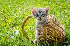 Kitten sitting in a basket. Cute little kitten sitting in a basket on the grass lawn Royalty Free Stock Photography