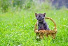 Kitten sitting in a basket. Cute little kitten sitting in a basket on the grass lawn Stock Photo