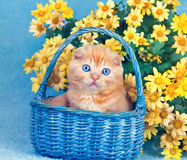 Kitten sitting in a basket near yellow flowers Stock Images