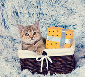 Kitten sitting in a basket with present box Stock Photos