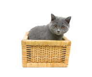 Kitten sitting in basket on a white background. Stock Photos