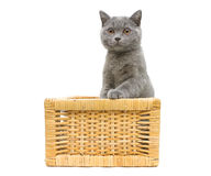 Kitten sitting in basket on a white background Royalty Free Stock Photos