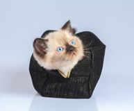 Kitten sitting in the beautician Stock Image