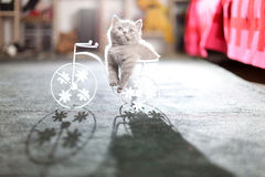 Kitten sitting in a bike flower pot. British Shorthair kitten sitting in a flower pot bicycle Stock Photos