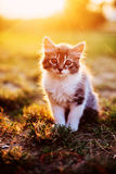 Kitten sitting in a bright sun Royalty Free Stock Photos