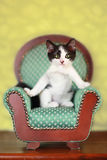 Kitten Sitting on a Chair. Black and White Kitten Sitting on a Chair royalty free stock photos