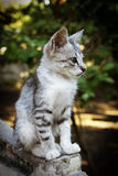 Kitten sitting Royalty Free Stock Image