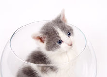 Kitten sitting in a fishbowl. A kitten sits inside of a glass fishbowl on white background Royalty Free Stock Photos